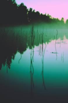 Reflection Sun Tree Free Photo