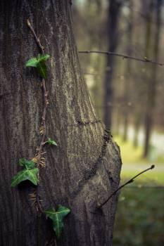 Tree leaves #27074