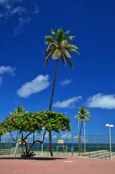 #86 - Palmtree  - Jardim dos Namorados #27090