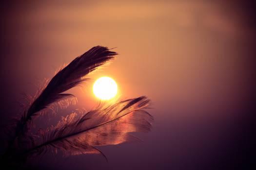 Sunset feathers Free Photo