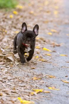 SWEET DOG #27164