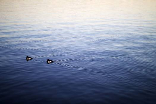 Ducks on a gradient #27166