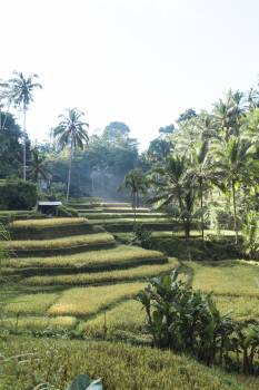 Maze Landscape Agriculture #271865
