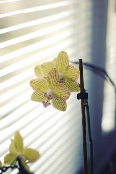 Orchid #27203