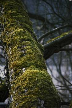 Tree Free Photo