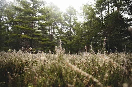 Foggy woods Free Photo