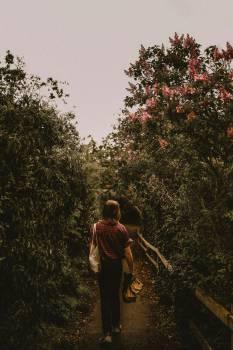 Tree Autumn Outdoors #272574