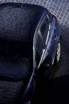 Seat belt Afternoon Sunday #27260