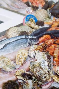 Crustacean Seafood Crab Free Photo