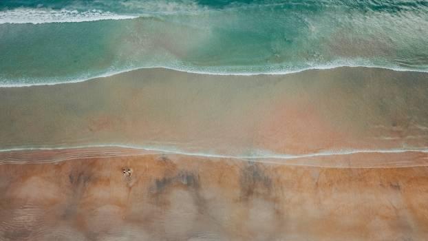 Stingray Ray Sand Free Photo