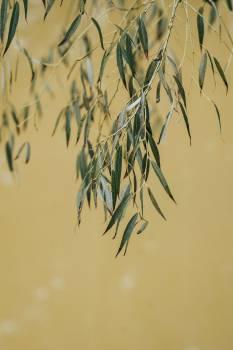 Tree Bamboo Plant Free Photo
