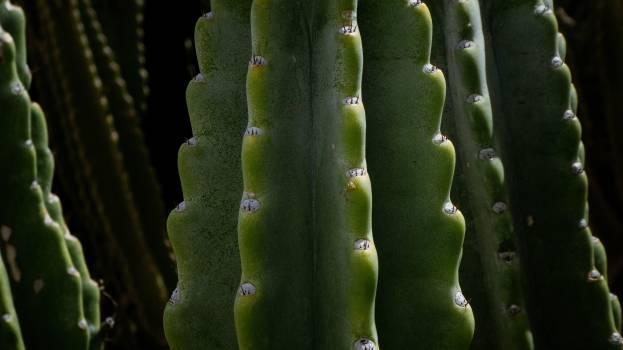 Cactus Plant Flatworm #276210