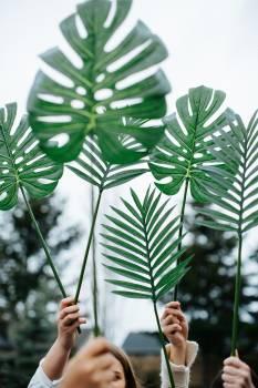 Plant Leaf Lily Free Photo