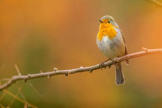 Bird Finch Warbler #277378