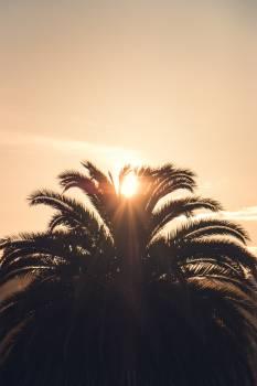 Palm Cactus Tree Free Photo
