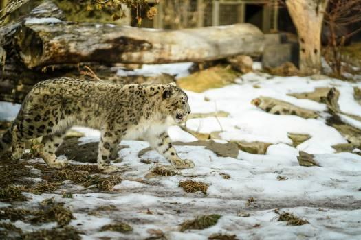 Leopard Feline Fur #279058
