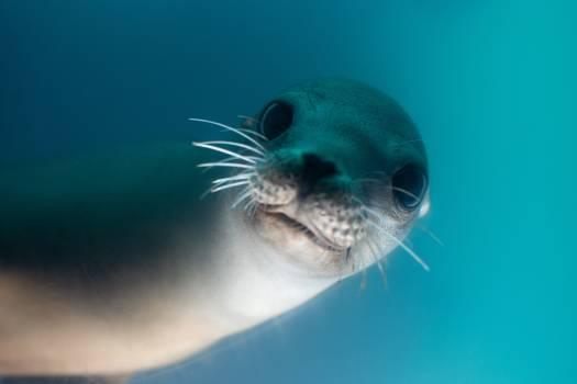 Habitat Sea Body of water Free Photo