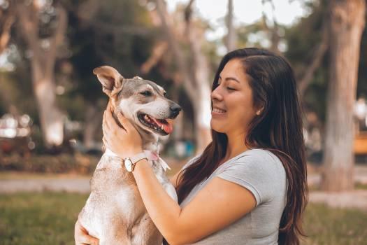 Greyhound Hound Dog Free Photo