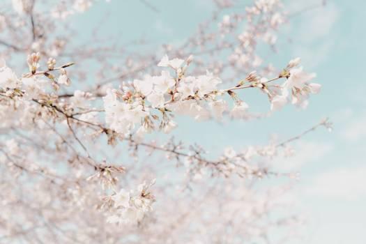 Tree Snow Almond #280626
