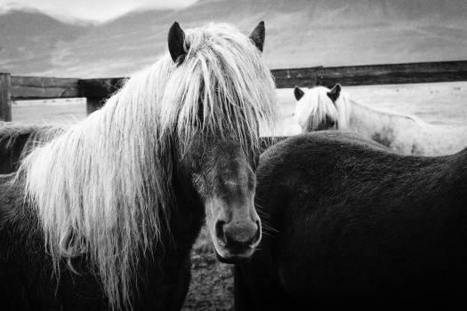 Horse Animal Vertebrate Free Photo