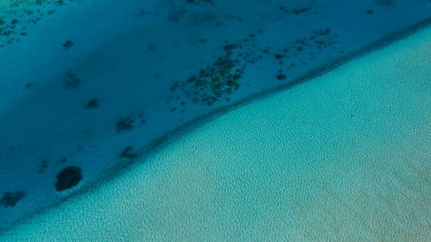 Sand Water Stingray Free Photo