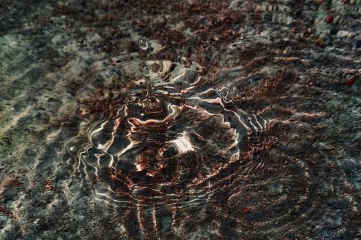 Crab Arthropod Invertebrate #281883