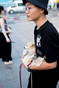 Leash Dog Restraint Free Photo
