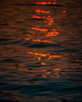 Reflection Goldfish Water Free Photo