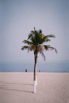 Coconut Palm Beach Free Photo
