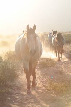 Ranch Cattle Horse Free Photo