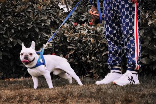 Dog Canine Bulldog #283181