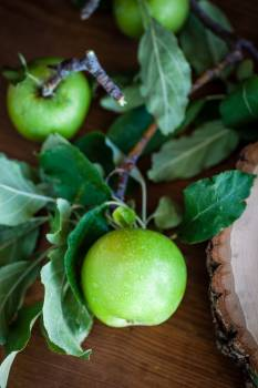 Fruit Edible fruit Apple #283416