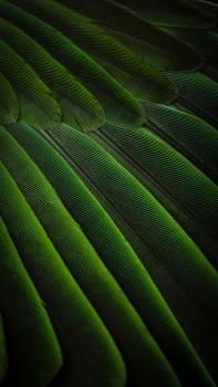Texture Pattern Greenery Free Photo