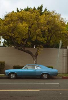 Car Motor vehicle Tree Free Photo