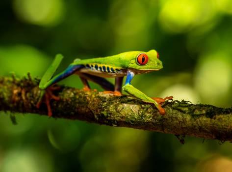 Tree frog Frog Amphibian #284482