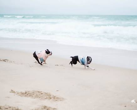 Beach Ocean Sand #284537