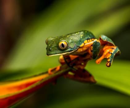 Tree frog Frog Amphibian #284551