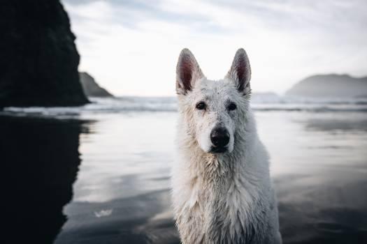 Hound Dog Hunting dog Free Photo