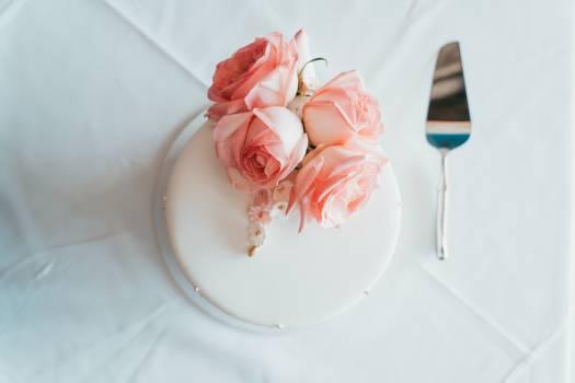 Flower Rose Pink Free Photo