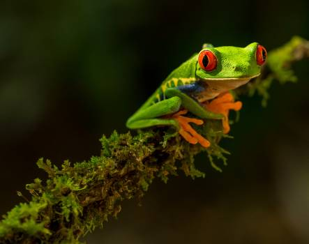 Tree frog Frog Amphibian #285983