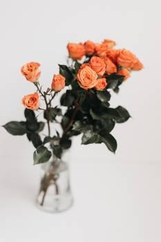 Bouquet Flower Ground Free Photo