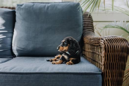 Dog Hound Pet #287490