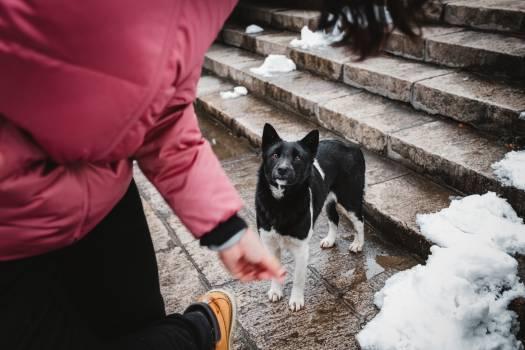 Shepherd dog Dog Canine #288073