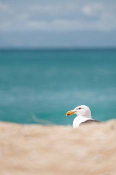 Gull Bird Sea #288507