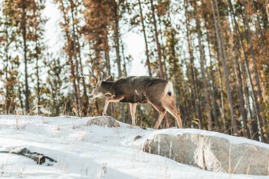 Snow Winter Wolf #289073
