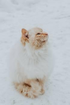 Cat Cute Pet #289356