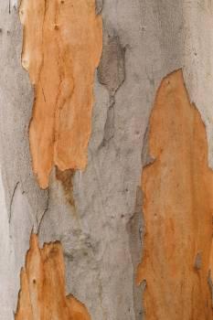 Bark Texture Tree Free Photo