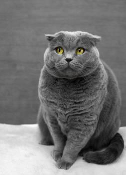 Cat Feline Kitty Free Photo