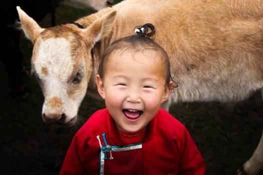 Young mammal Calf Animal Free Photo