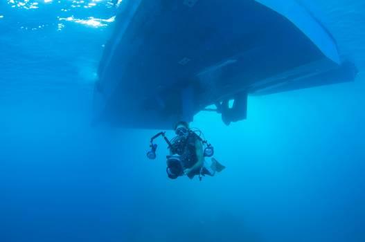 Diver Scuba diver Sea Free Photo